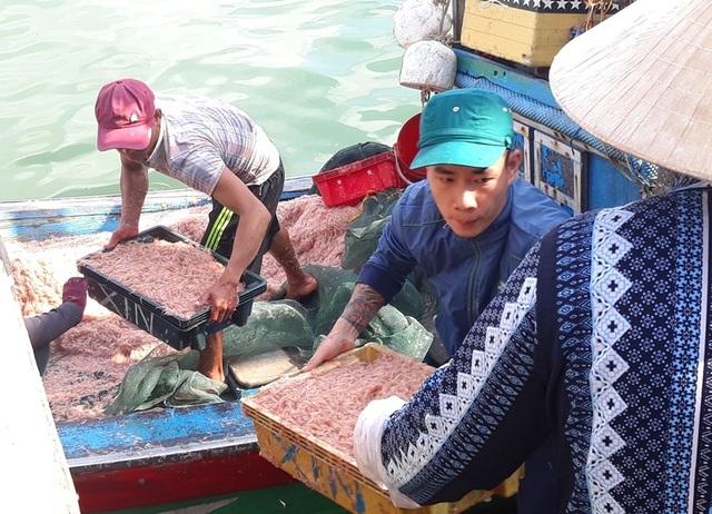 """Ngư dân Bình Định trúng lớn """"lộc biển"""", kiếm tiền triệu chỉ vài giờ - 5"""