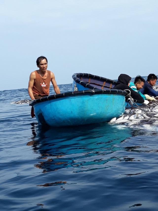 """Tận mắt nhìn mẻ cá """"siêu khủng"""" 100 tấn trong lưới ngư dân Quảng Trị - 4"""