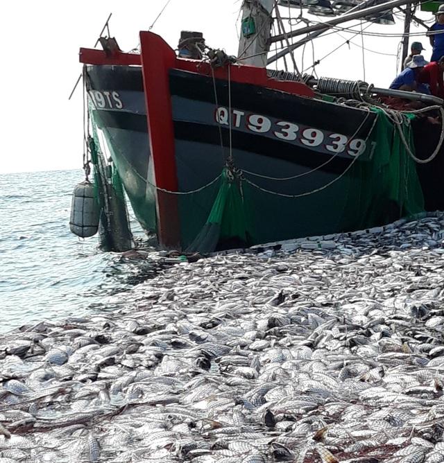 """Tận mắt nhìn mẻ cá """"siêu khủng"""" 100 tấn trong lưới ngư dân Quảng Trị - 2"""