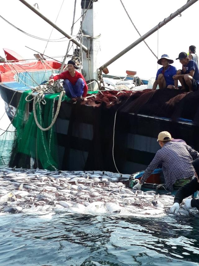 """Tận mắt nhìn mẻ cá """"siêu khủng"""" 100 tấn trong lưới ngư dân Quảng Trị - 5"""
