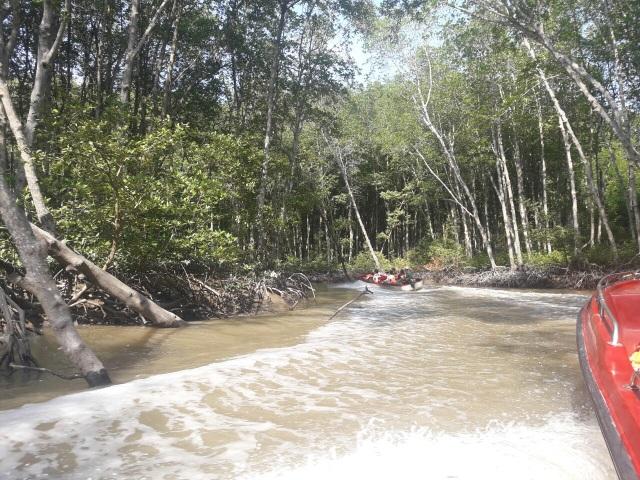 Đến Cần Giờ khám phá rừng Sác cực hoang dã  - 5