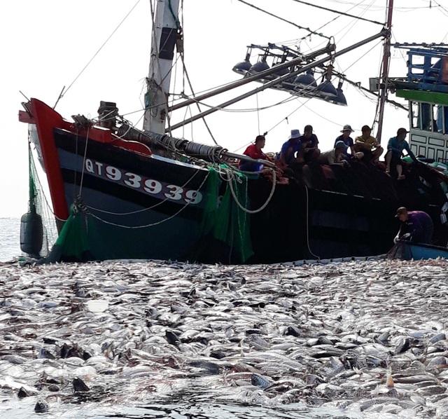 """Tận mắt nhìn mẻ cá """"siêu khủng"""" 100 tấn trong lưới ngư dân Quảng Trị - 1"""