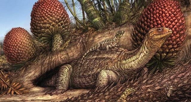 Phát hiện trường hợp ung thư xương hiếm gặp ở tổ tiên loài rùa các đây 240 triệu năm - 1