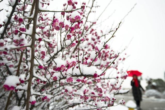 """""""Đẹp lịm tim"""" cảnh sắc trong trẻo ngày tuyết rơi dày như chốn tiên cảnh - 5"""