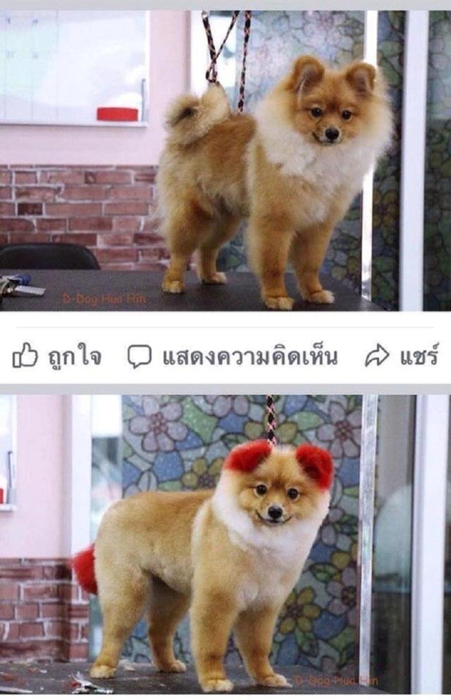 Dị ứng với thuốc nhuộm, chú chó rụng cả tai - 2