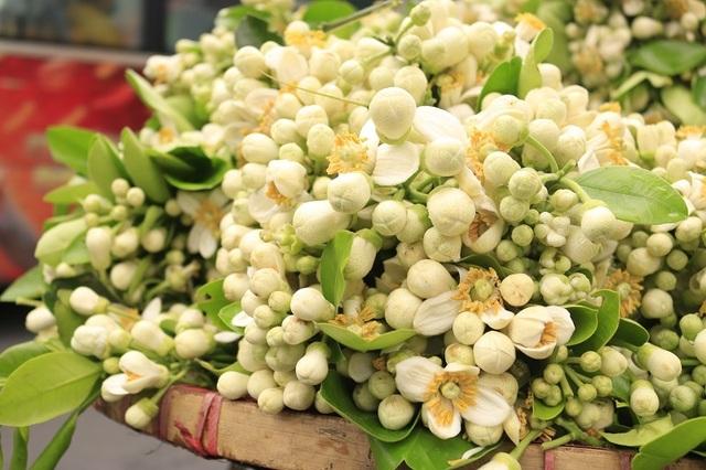 Đào phai, mai tàn, dân Hà thành chơi hoa bày đĩa nửa triệu/kg - 2