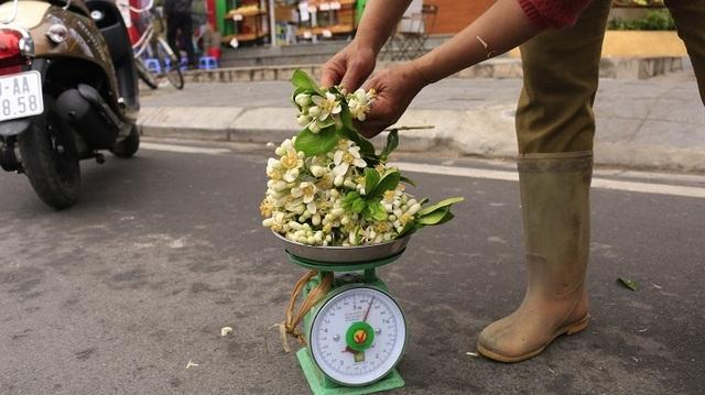 Đào phai, mai tàn, dân Hà thành chơi hoa bày đĩa nửa triệu/kg - 6