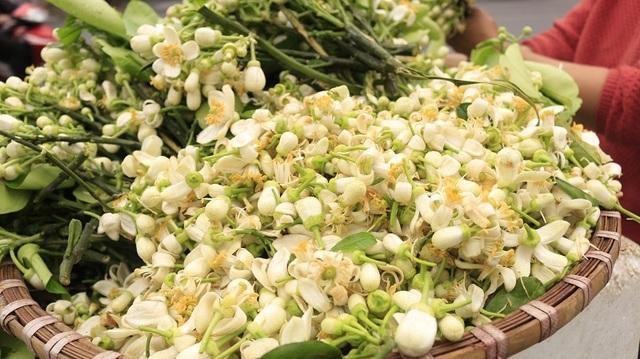 Đào phai, mai tàn, dân Hà thành chơi hoa bày đĩa nửa triệu/kg - 9