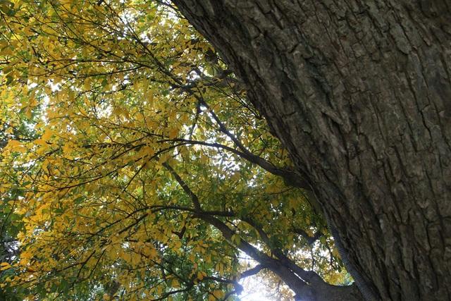 Ngắm Hà Nội đẹp đến nao lòng vào mùa cây thay lá - 10