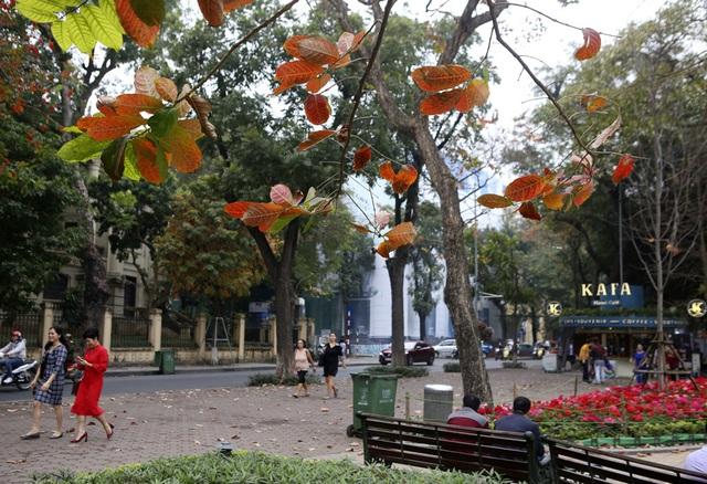 Ngắm Hà Nội đẹp đến nao lòng vào mùa cây thay lá - 14