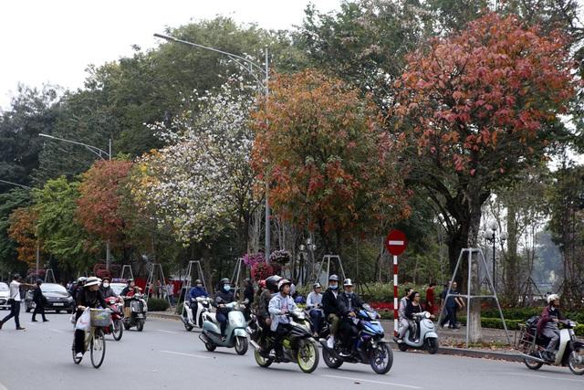 Ngắm Hà Nội đẹp đến nao lòng vào mùa cây thay lá - 2