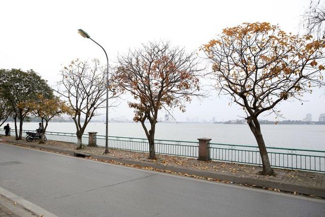 Ngắm Hà Nội đẹp đến nao lòng vào mùa cây thay lá - 6