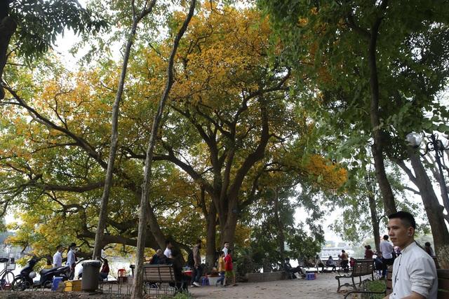 Ngắm Hà Nội đẹp đến nao lòng vào mùa cây thay lá - 9