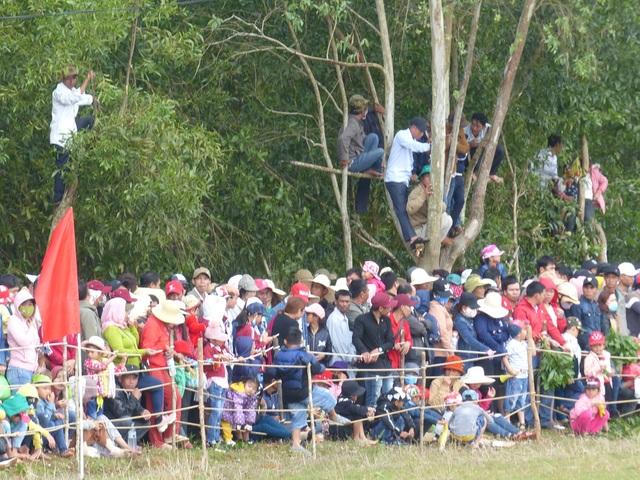 Du khách thích thú khi đến xem Hội đua ngựa Gò Thì Thùng - 7