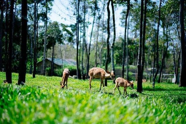 """Vinpearl Safari Phú Quốc – Trải nghiệm """"Tết mới"""",  gắn kết thiên nhiên  - 3"""