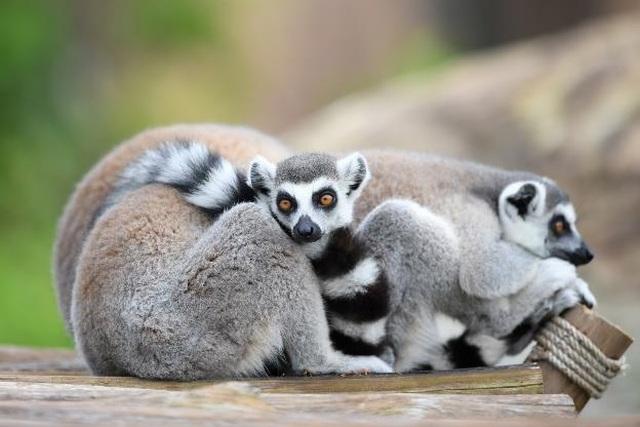 """Vinpearl Safari Phú Quốc – Trải nghiệm """"Tết mới"""",  gắn kết thiên nhiên  - 4"""