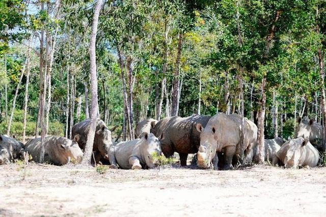 """Vinpearl Safari Phú Quốc – Trải nghiệm """"Tết mới"""",  gắn kết thiên nhiên  - 8"""