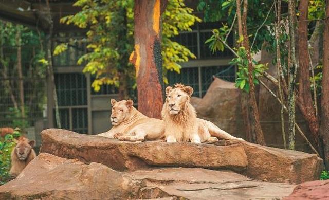 """Vinpearl Safari Phú Quốc – Trải nghiệm """"Tết mới"""",  gắn kết thiên nhiên  - 9"""