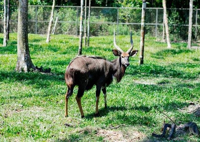 """Vinpearl Safari Phú Quốc – Trải nghiệm """"Tết mới"""",  gắn kết thiên nhiên  - 10"""