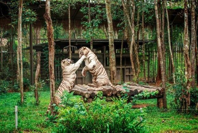 """Vinpearl Safari Phú Quốc – Trải nghiệm """"Tết mới"""",  gắn kết thiên nhiên  - 16"""