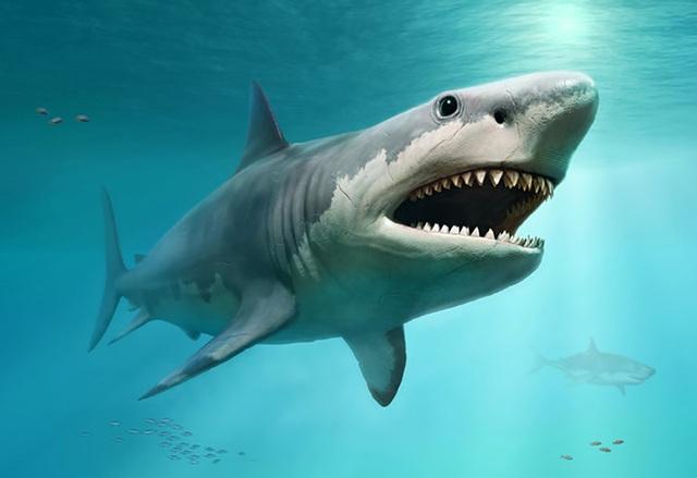 Cá mập trắng lớn đã quét sạch siêu cá mập Megalodon khổng lồ? - 1
