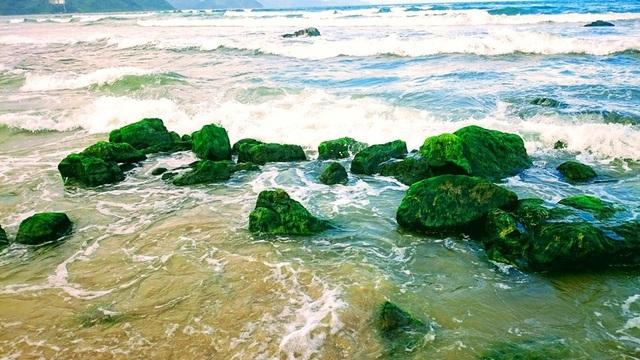 Rạn Nam Ô: Đẹp ngỡ ngàngrạn rêu xanh thu hút du khách ngày đầu xuân - 2