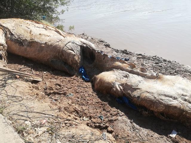 Xác cá voi hơn 10 tấn trôi dạt vào vùng biển Bạc Liêu - 5