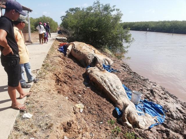 Xác cá voi hơn 10 tấn trôi dạt vào vùng biển Bạc Liêu - 3