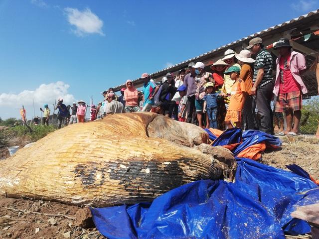 Xác cá voi hơn 10 tấn trôi dạt vào vùng biển Bạc Liêu - 4