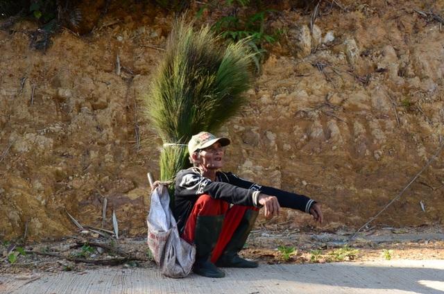 Quảng Ngãi: Mưu sinh nhờ hái lộc rừng sau Tết  - 1