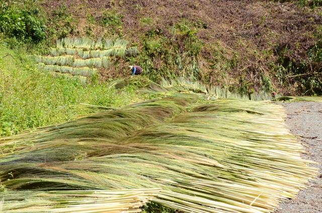 Quảng Ngãi: Mưu sinh nhờ hái lộc rừng sau Tết  - 4