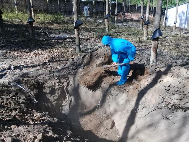 Tiêu hủy đàn heo mắc bệnh tại thôn 1A, xã Đăk La, huyện Đăk Hà - 5.jpg