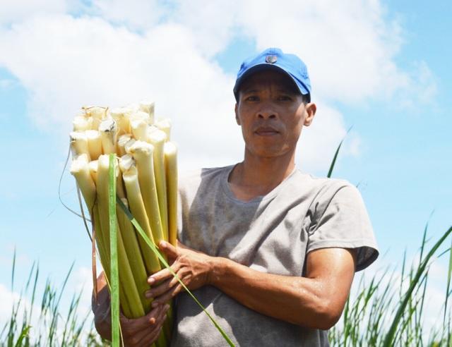 Cà Mau: Người dân kiếm nửa triệu/ngày với đặc sản bồn bồn sau Tết - 1