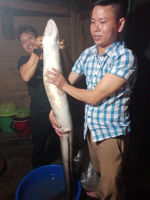 Bắt được cá chình khủng nặng 14 kg, bán 6 triệu đồng - 1