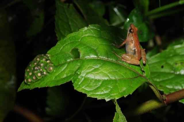 Phát hiện loài ếch mới ở vùng núi Ethiopia hẻo lánh - 1