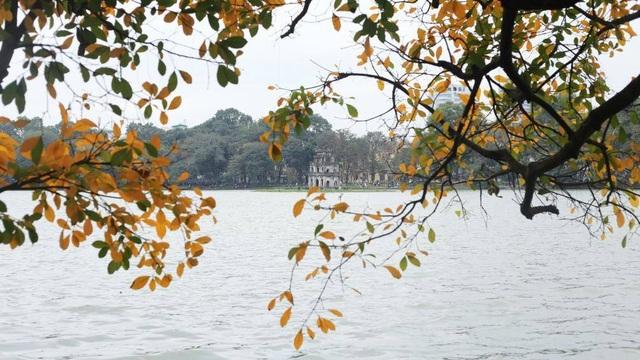 Nao lòng với Hà Nội mùa cây thay lá - 1
