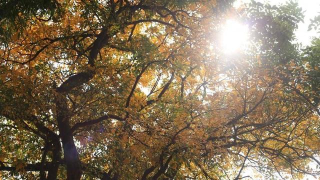 Nao lòng với Hà Nội mùa cây thay lá - 2