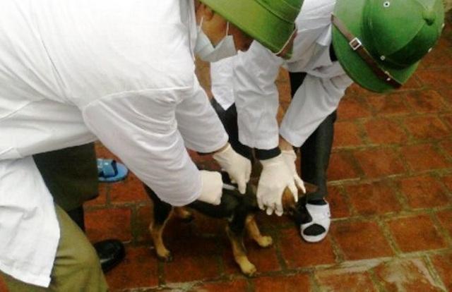 Hơn 600 người bị chó, mèo cắn trong dịp Tết Nguyên đán Kỷ Hợi - 1