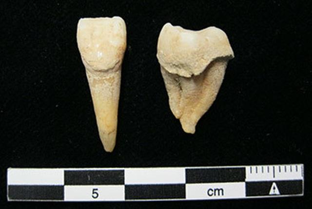 Cao răng cổ đại cho thấy người Mông Cổ đã biết sử dụng sữa từ 3.000 năm trước - 2
