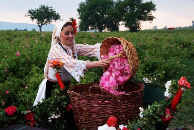 """Ngành """"công nghiệp hoa hồng"""" Bulgaria thu hút nhà đầu tư trên toàn thế giới - 1"""