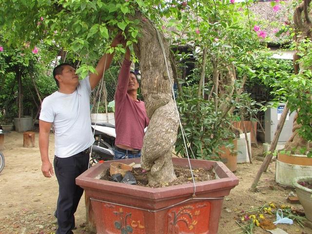 Đà Nẵng: Kiếm nửa tỷ đồng mỗi năm từ nghề săn cây cảnh - 2