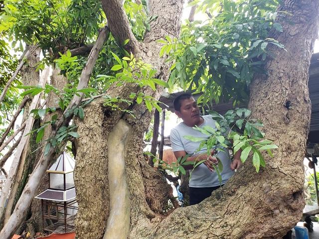 Đà Nẵng: Kiếm nửa tỷ đồng mỗi năm từ nghề săn cây cảnh - 3