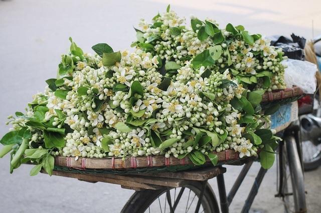 """Hoa bưởi đầu mùa xuống phố, giá 300.000đ/kg vẫn """"cháy hàng"""" - 3"""