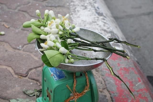 """Hoa bưởi đầu mùa xuống phố, giá 300.000đ/kg vẫn """"cháy hàng"""" - 5"""
