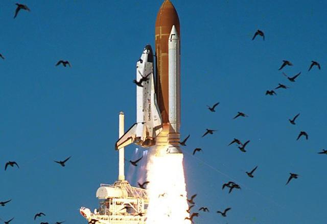 Tên lửa của Elon Musk có thể bị đe dọa nghiêm trọng bởi bụi và phân chim - 1