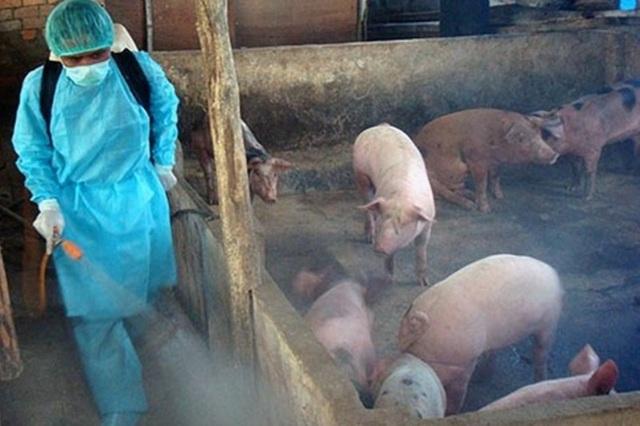 Khẩn cấp ngăn chặn, ứng phó với bệnh dịch tả lợn châu Phi - 1