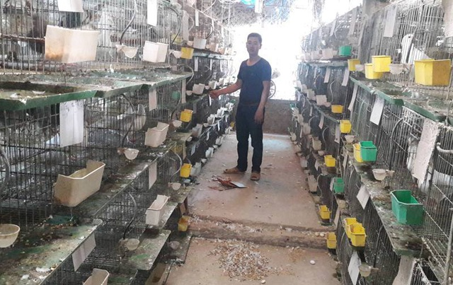 Chàng thanh niên kiếm hàng trăm triệu đồng từ chim bồ câu Pháp - 1