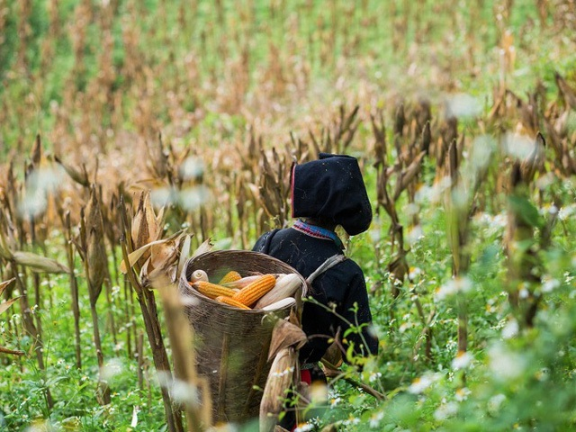 Cảnh sắc Việt Nam quyến rũ và thân thương trên hàng loạt các trang báo nước ngoài - 12