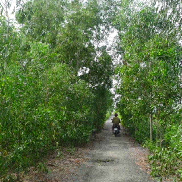 Hơn 1.458 tỷ đồng phát triển du lịch sinh thái Vườn Quốc gia U Minh Hạ - 2