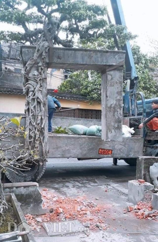 Xôn xao Nam Định: Cây sanh cổ bán kèm cổng nhà giá 6.000 USD? - 3